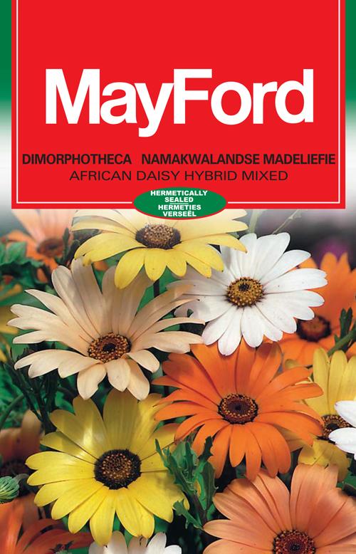 African Daisy Hybrid – Mixed