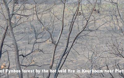2017: the year of devastating veld fires
