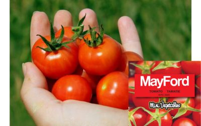 """MayFord's ultimate space saver, the MayFord """"Bite Size"""" tomato"""