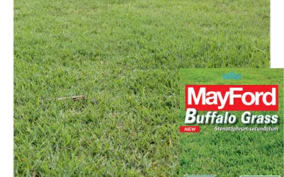Spring is the right time for sowing a new lawn