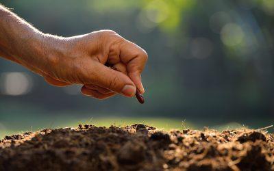 Seed Lawn Establishment