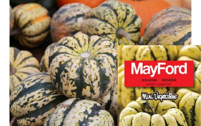 MayFord's Sweet dumpling squash might look a bit funny but is absolutely yummy!